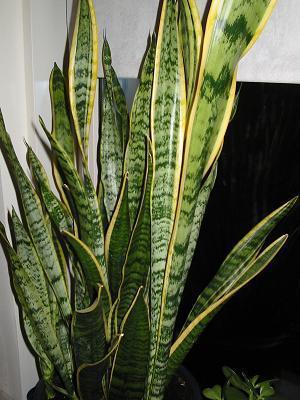 Planten in warm/koud trappenhuis?
