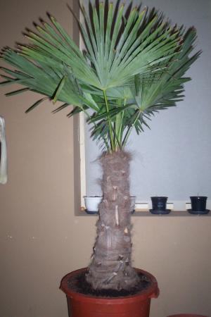 foto palm