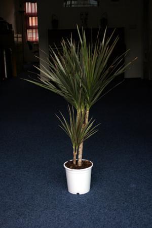 Identificatie plant