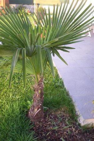 Foto's van m'n beginnende tropische tuin...