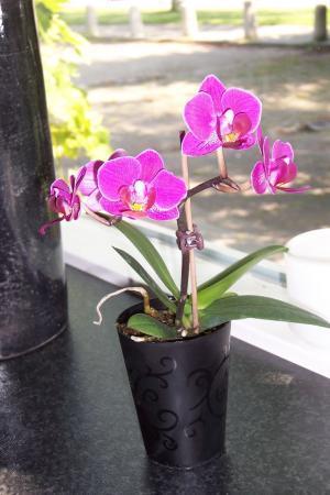 Mini phalaenopsis gekocht. maar niet in bark