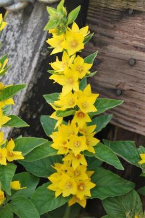 Stengel met gele bloempjes