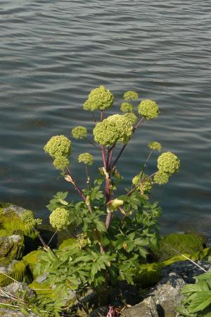 Planten op de Brabantse Wal