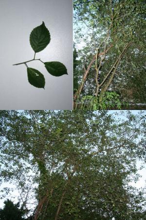 wat is dit voor een boom?