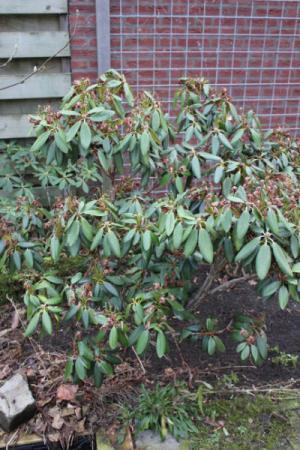 nieuwe tuin, welke plant is dit? (3)