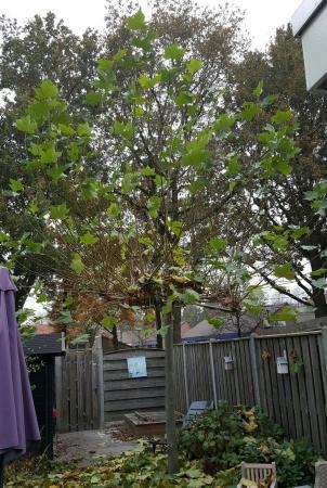 Help! Welke boom staat er in onze tuin?