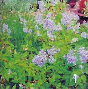 onbekende plant / bloem 1