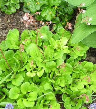 Hoe heet deze plant 2