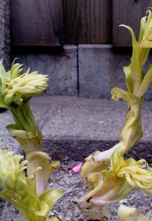wat voor plant is dit eigenlijk