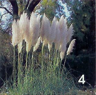 onbekende plant / bloem 4