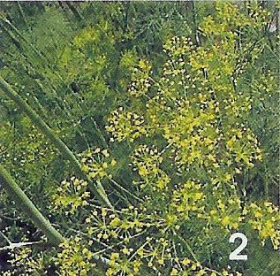 onbekende plant / bloem 2