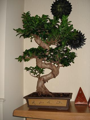 snoeien bonsai
