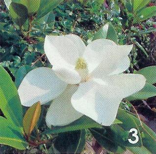 onbekende plant / bloem 3