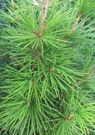 Hoe heet dit boompje?