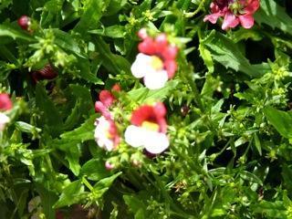 welke bloemen zijn dit?