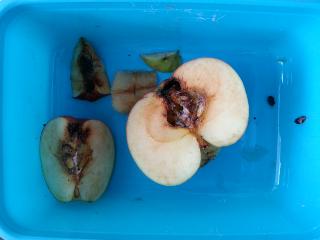 appels klokhuis aangetast