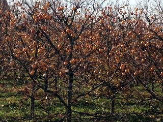 Groenten en fruit forum