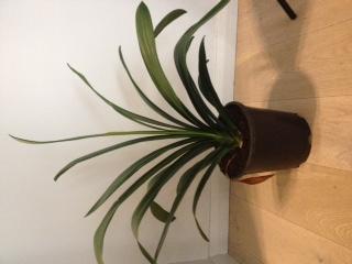 Ik zou graag de naam van deze plant kennen.