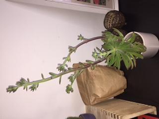 Welke plant heb ik gekocht?