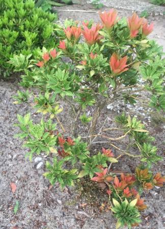 Welk soort boompje is dit?