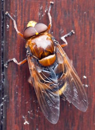 welk insect is dit/