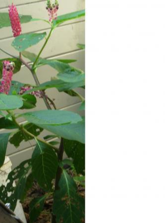 Welke eenjarige plant is dit?