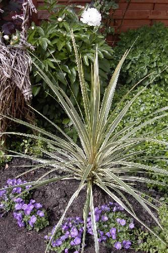 naam van deze planten