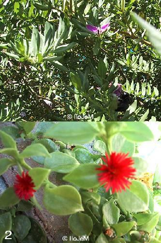 2 onbekende planten uit Kreta