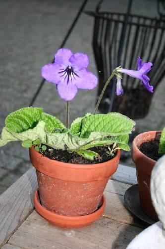 Wie kent de naam van dit plantje?