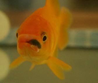 Welke ziekte heeft mijn vis?