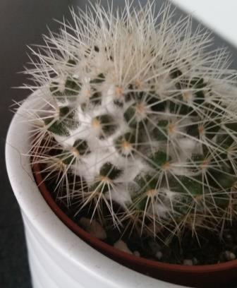 Wat is er aan de hand met mijn cactus?