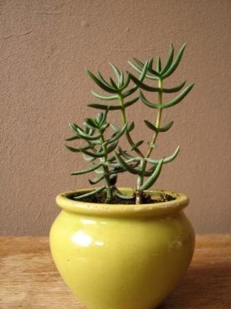 Weet iemand welke plantjes dit zijn?