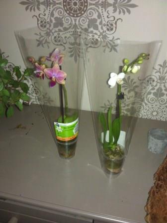 mini orchideetjes