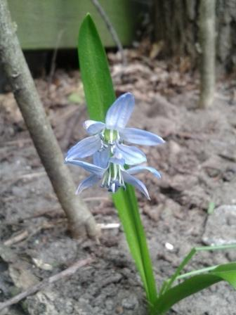 Wat is dit voor bloemetje?