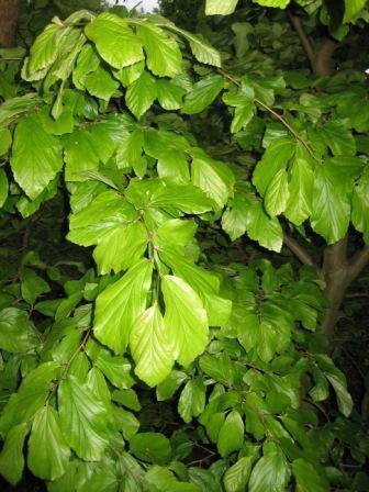 Wat is deze boom/heester?