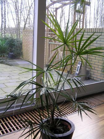 Wat voor palm is dit?