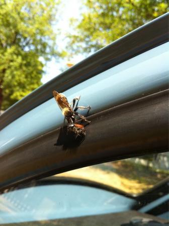 Iemand enig idee dit voor insect is ?!?!?