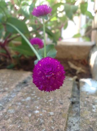 Weet iemand welke bloem dit is?