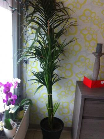 Een kamerplant, wil graag correct verzorgen