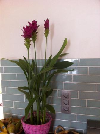 plant met fuchsia bloem
