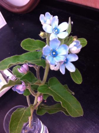 Wie weet hoe deze (snij)bloem heet?