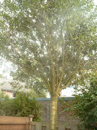 Moet ik deze boom snoeien?