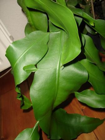 Naam en verzorging van onbekende plant