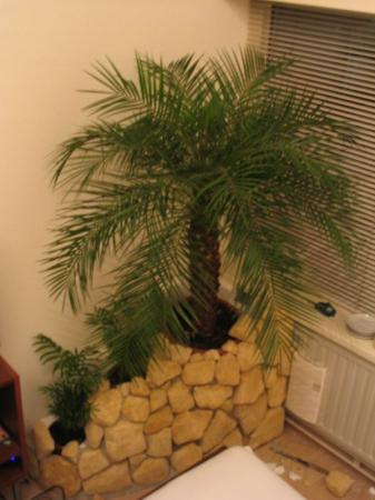 Zelfbouw plantenbakken voor mijn palmen