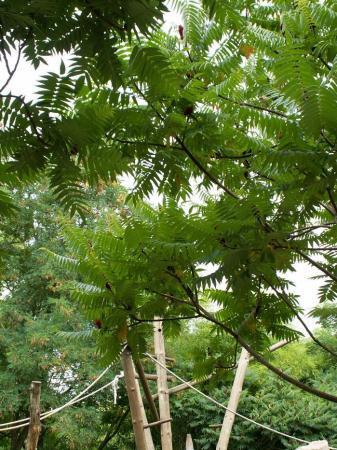 onbekende plant uit Middelandsezee gebied (foto3)