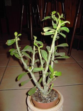 Wat is de naam van deze plant