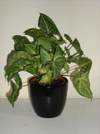 Welke plant + wat verkeerd?