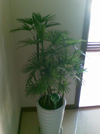 Wat voor locatie is correct voor deze plant