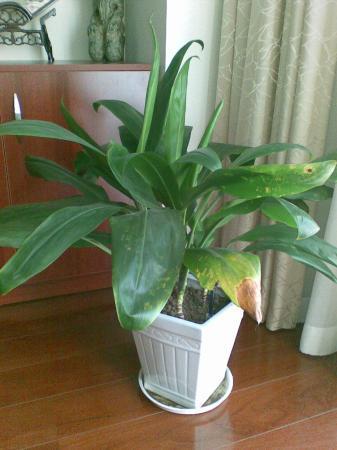 wat voor verzorging heeft deze plant nodig