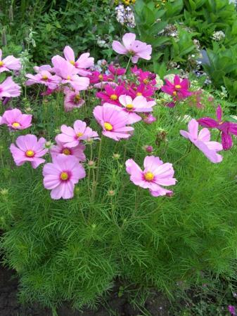 mooie, maar onbekende bloemen